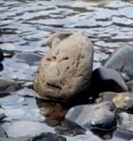 stone angry man